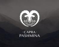 Capra Pashmina