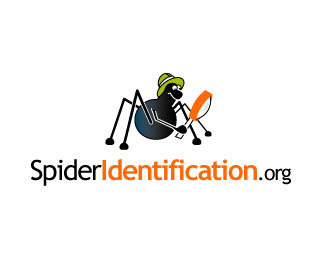Spider Identification.org