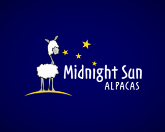 midnight sun alpacas