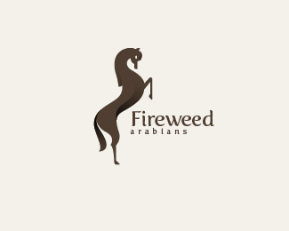Fireweed Arabians