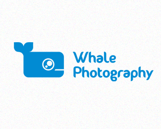 Whale Photography