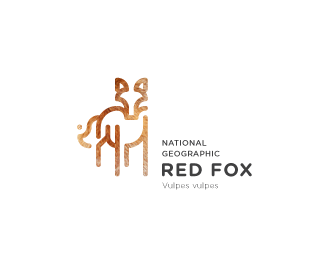 RED FOX / National Geographic