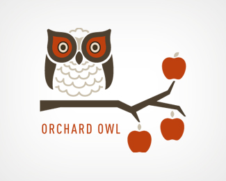 Orchard Owl