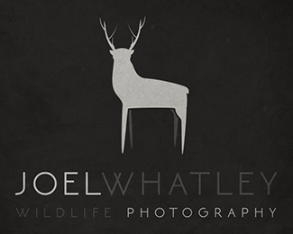 Joel Whatley - Wildlife Photography