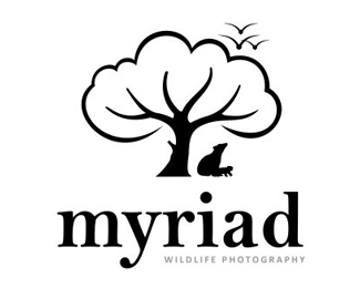 Myriad WildLife Photography