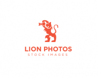 Lion Photos